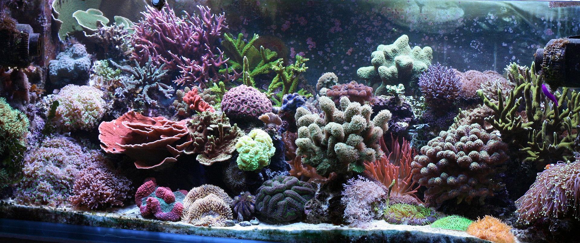 Reef_Aquascape