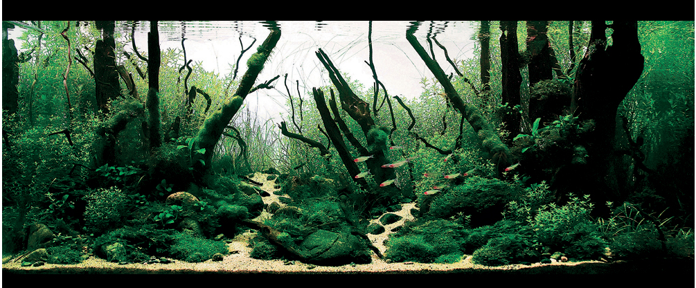 aquascapes
