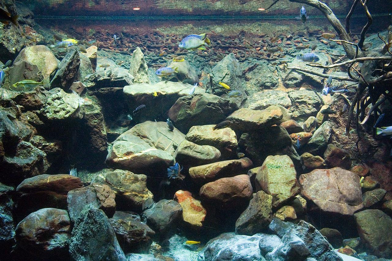 biotope aquascape