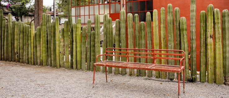 frida kahlo cactus fence.