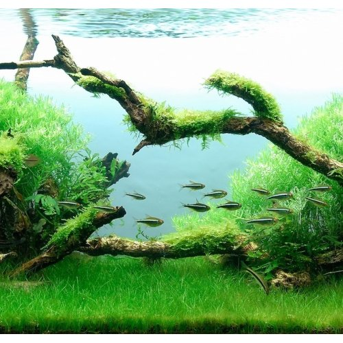 Forest Aquascape: The Strange And Serene Beauty Of Aquascapes. « FASHIONSPHINX
